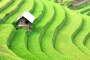 Circuit Nord au Sud Vietnam 23 jours