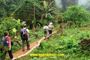 Trekking Vietnam (Trek 2 jours à Sapa)
