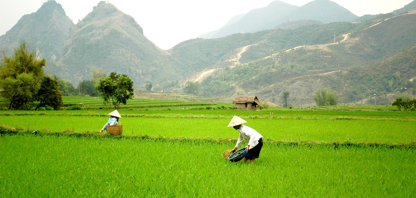 Voyage Vietnam authentique