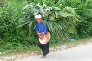Du Nord - Est Vietnam au Rive du Mékong 20 jours