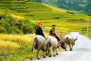 Voyage au Vietnam à travers le pays du dragon 21 jours