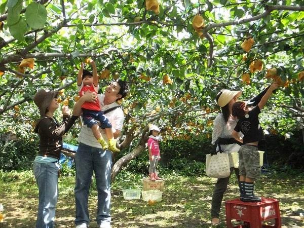 6-activites-a-ne-pas-rater-dans-le-delta-du-mekong-visite-des-vergers