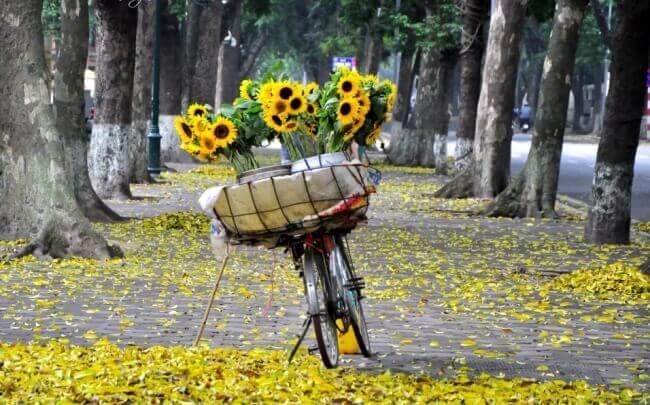 hanoi-automne