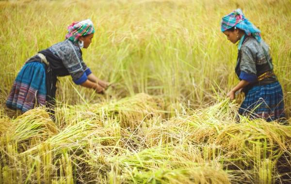 les-techniques-agricoles-dans-le-nord-vietnam
