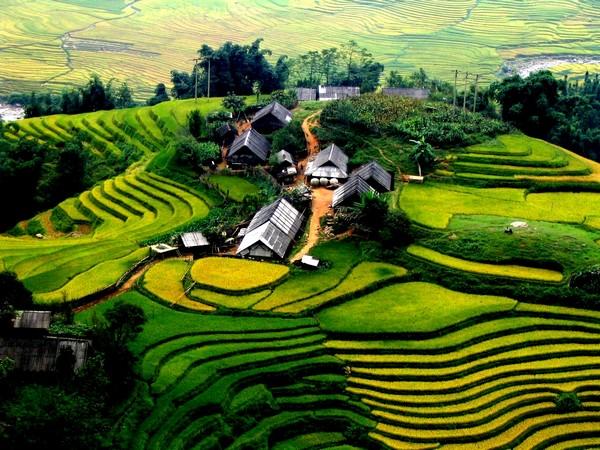 rizieres-sapa-laocai